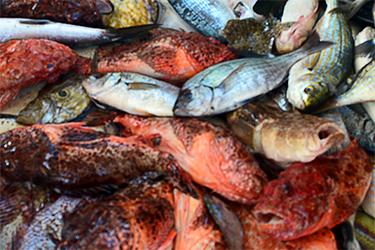 Pescaturismo pesce